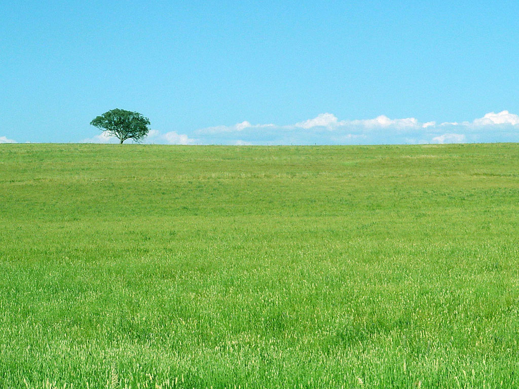 Green Meadow | Green meadow and snowy mountains wallpaper | High ...
